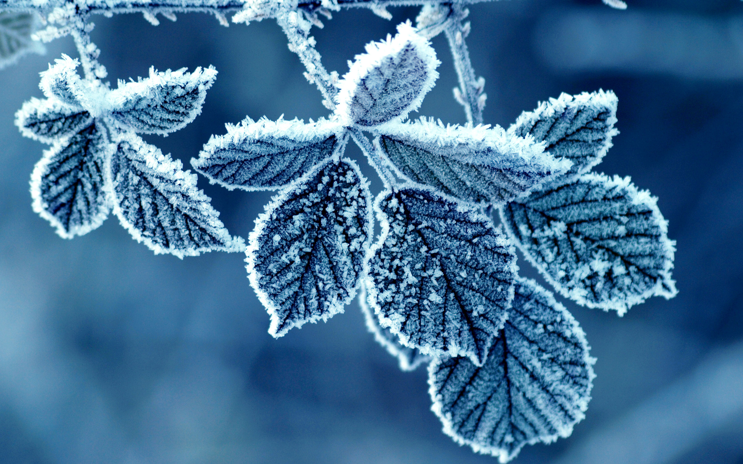 cold-winter-morning-frost-leaves (2)